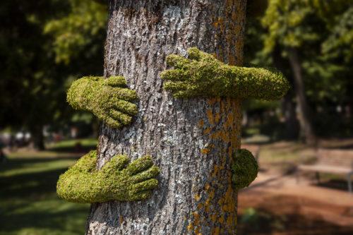 TREEHU ©  Monsieur Plant Christophe Guinet