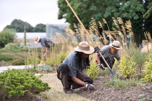 Le travail et les conseils des jardiniers à suivre sur le Blog des jardiniers du Louvre-Lens © F. Iovino / Louvre-Lens